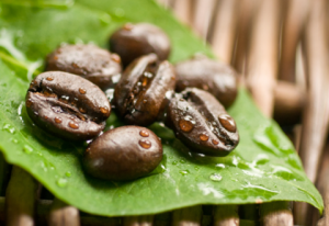 pure-green-coffee-bean-extract